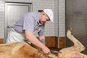 Futterfleisch ist ein Meisterbetieb