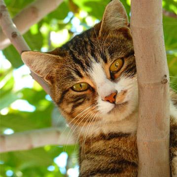 Gesundes Futter für eine gesunde Katze